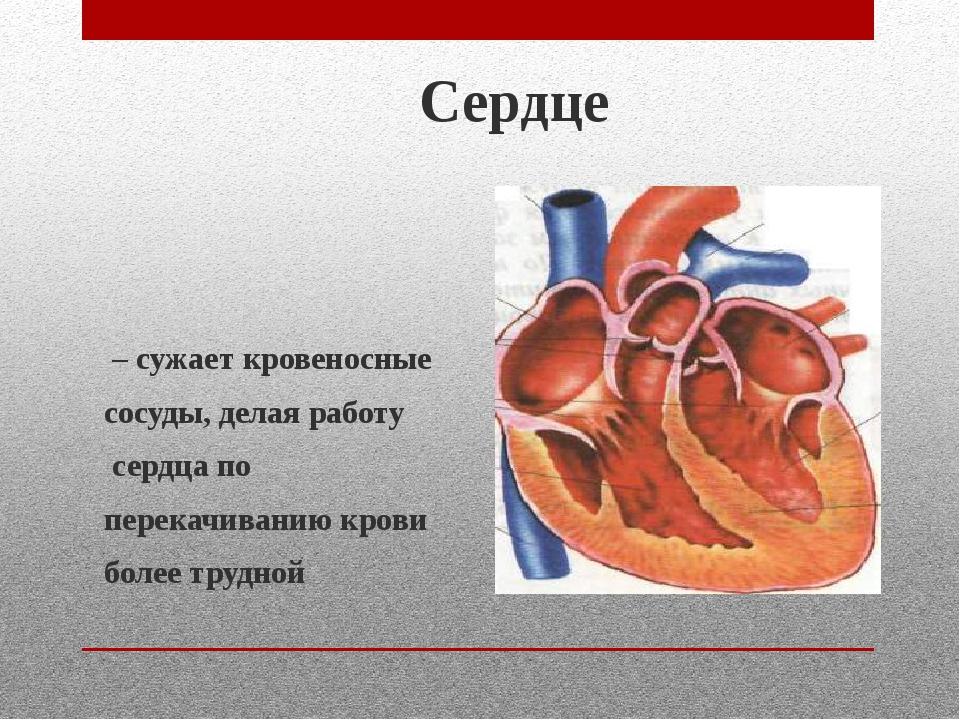 Сердце – сужает кровеносные сосуды, делая работу сердца по перекачиванию кров...
