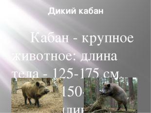 Дикий кабан Кабан - крупное животное: длина тела - 125-175 см, масса - 150-30