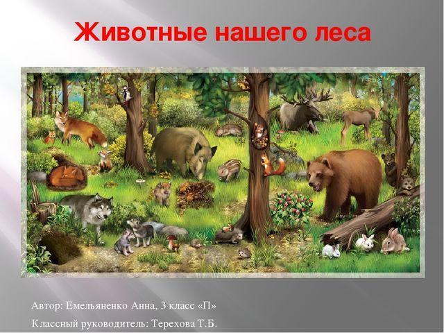 Животные нашего леса Автор: Емельяненко Анна, 3 класс «П» Классный руководите...