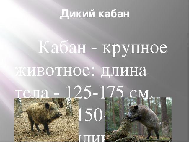 Дикий кабан Кабан - крупное животное: длина тела - 125-175 см, масса - 150-30...