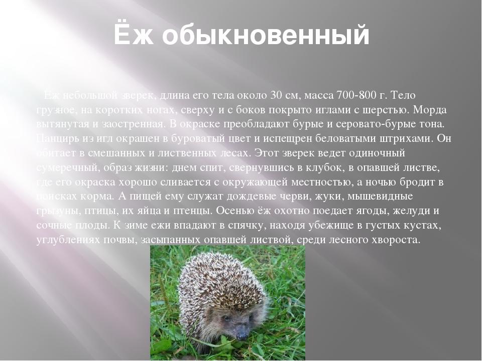 Ёж обыкновенный Ёж небольшой зверек, длина его тела около 30 см, масса 700-80...