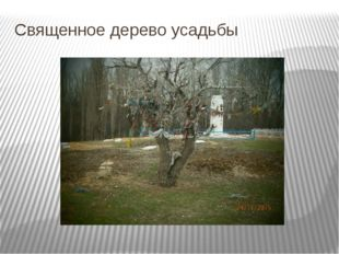 Священное дерево усадьбы