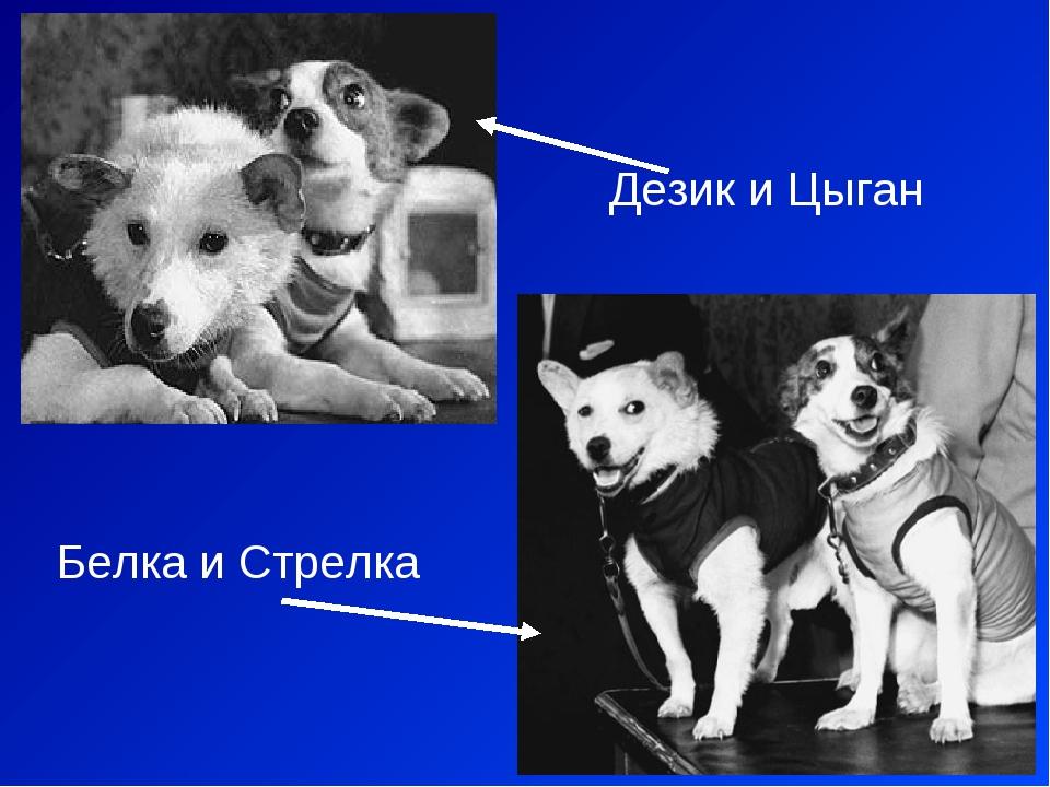 Дезик и Цыган Белка и Стрелка