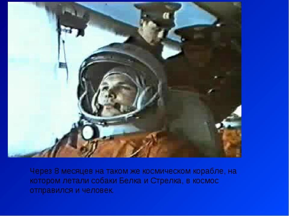 Через 8 месяцев на таком же космическом корабле, на котором летали собаки Бел...