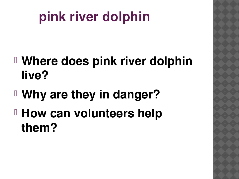 pink river dolphin Where does pink river dolphin live? Why are they in dange...