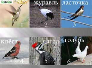 журавль ласточка клёст дятел голубь 1 2 3 4 5 6