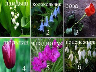 ландыш 1 колокольчик 2 роза 3 тюльпан 4 гладиолус 5 подснежник 6
