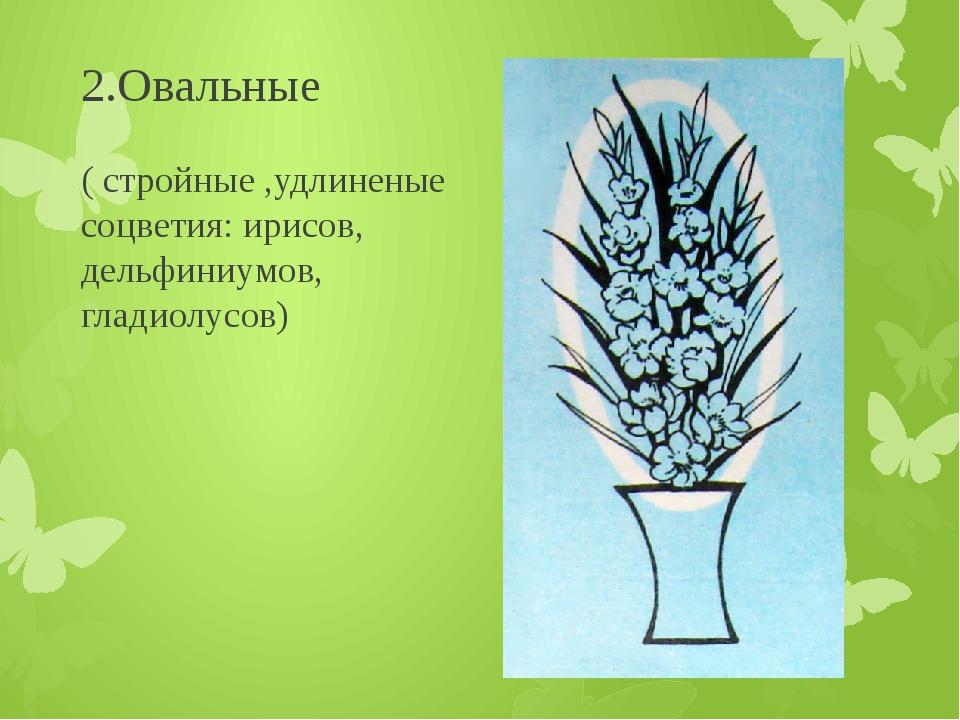 2.Овальные ( стройные ,удлиненые соцветия: ирисов, дельфиниумов, гладиолусов)