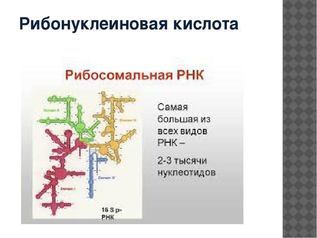 Рибонуклеиновая кислота