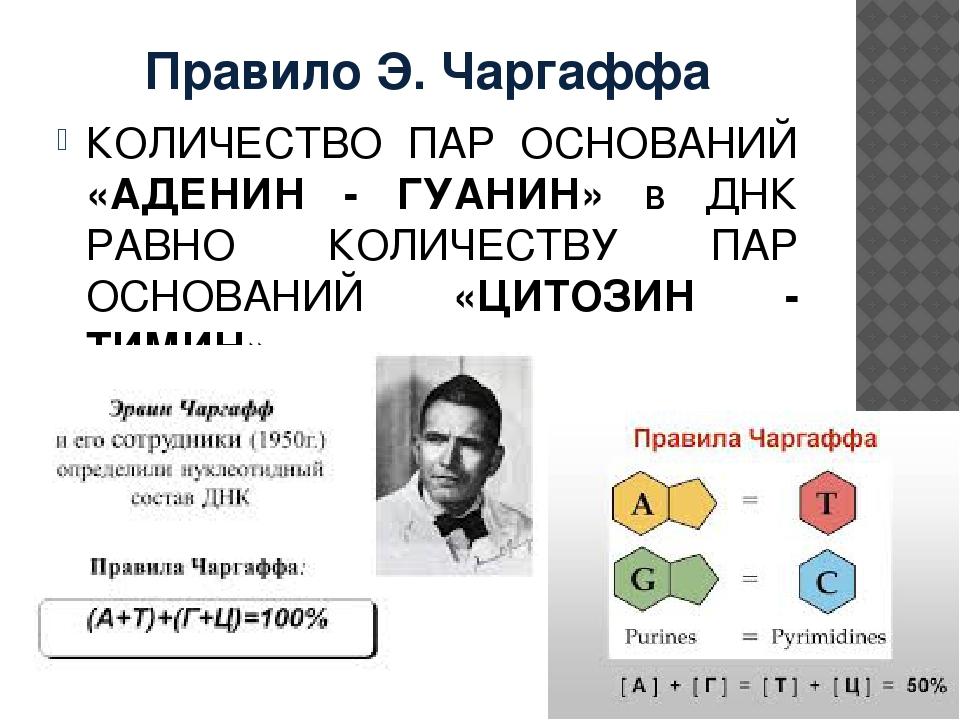 Правило Э. Чаргаффа КОЛИЧЕСТВО ПАР ОСНОВАНИЙ «АДЕНИН - ГУАНИН» в ДНК РАВНО КО...