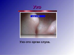 Ухо Ухо-это орган слуха.