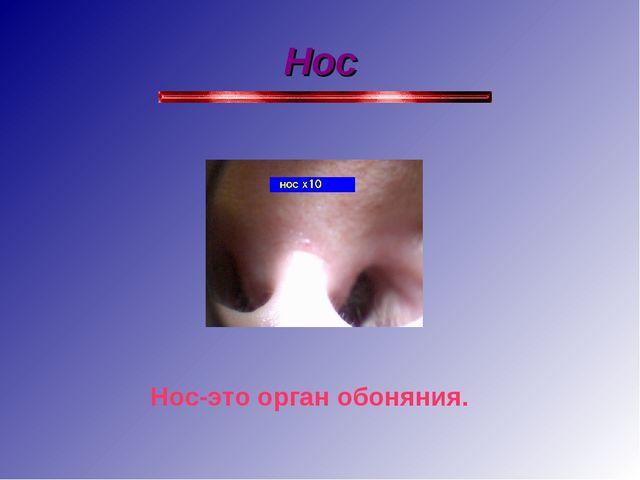 Нос Нос-это орган обоняния.