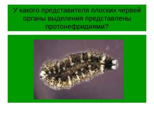 У какого представителя плоских червей органы выделения представлены протонефр
