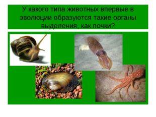 У какого типа животных впервые в эволюции образуются такие органы выделения,