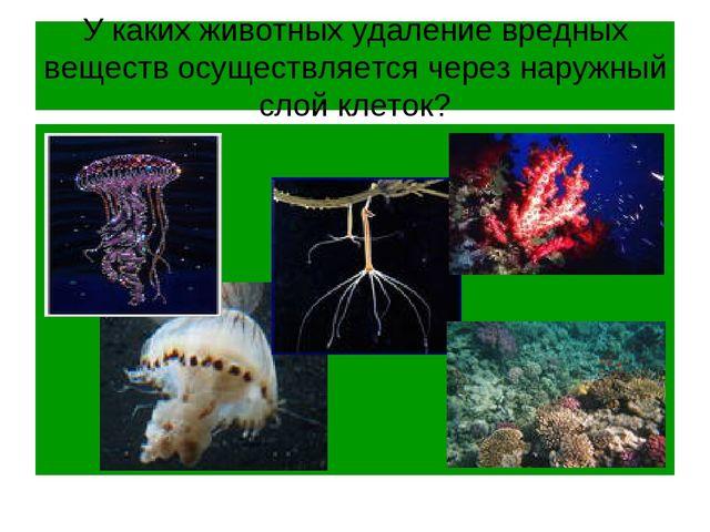 У каких животных удаление вредных веществ осуществляется через наружный слой...