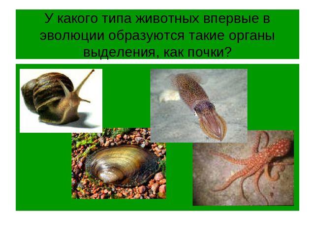 У какого типа животных впервые в эволюции образуются такие органы выделения,...