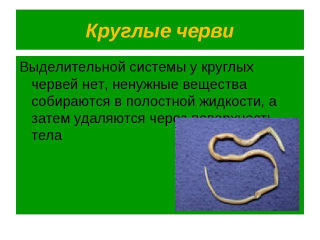 Круглые черви Выделительной системы у круглых червей нет, ненужные вещества с...