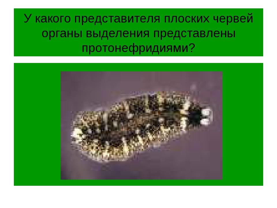 У какого представителя плоских червей органы выделения представлены протонефр...