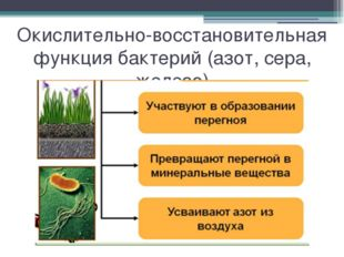 Окислительно-восстановительная функция бактерий (азот, сера, железо)