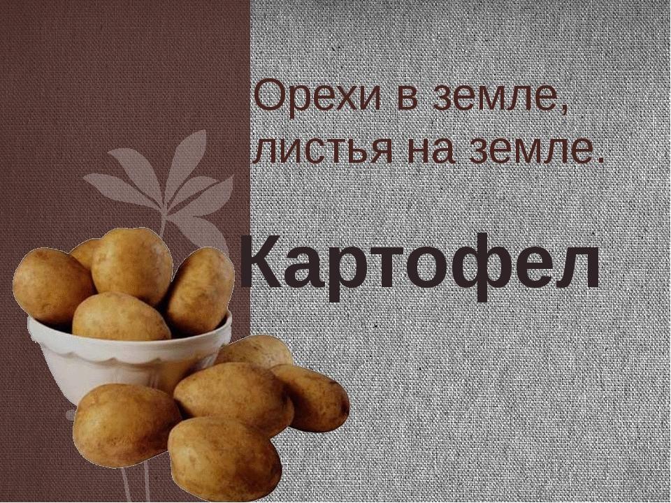 Орехи в земле, листья на земле. Картофель