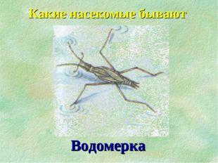 Водомерка Какие насекомые бывают