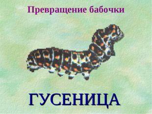Превращение бабочки ГУСЕНИЦА