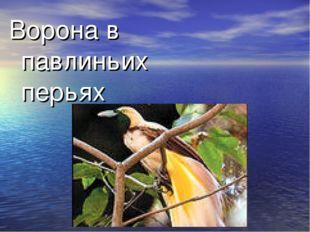 Ворона в павлиньих перьях Человек, безуспешно старающийся казаться лучше, чем