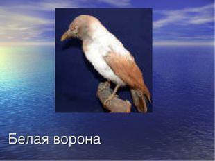 Белая ворона Человек который сильно отличается т других