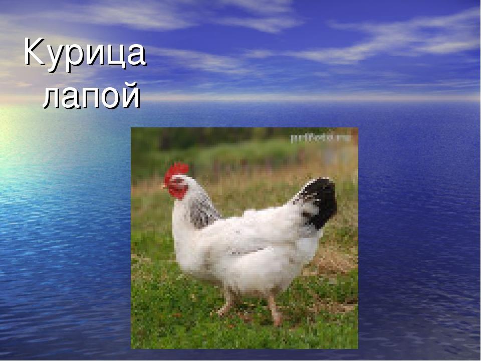 Курица лапой Неразборчива, неряшливо
