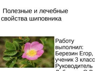 Полезные и лечебные свойства шиповника Работу выполнил: Березин Егор, ученик