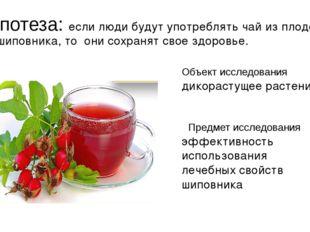 Гипотеза: если люди будут употреблять чай из плодов шиповника, то они сохраня