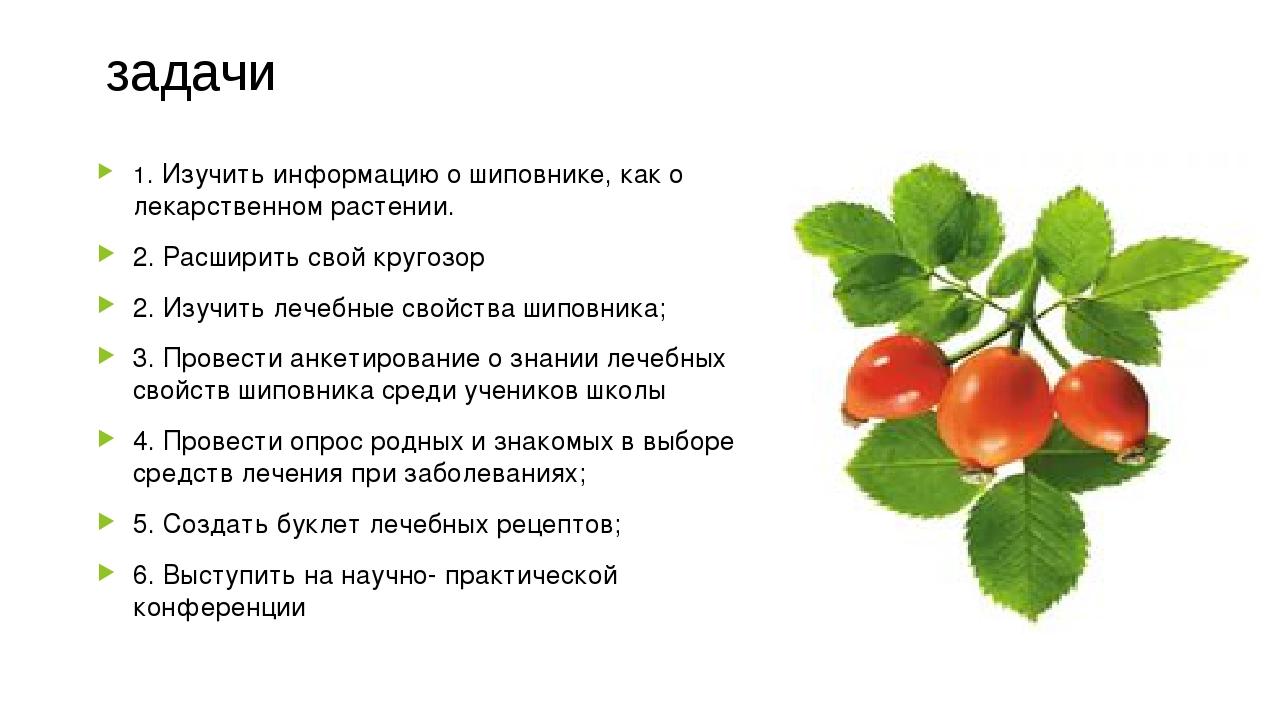 задачи 1. Изучить информацию о шиповнике, как о лекарственном растении. 2. Р...