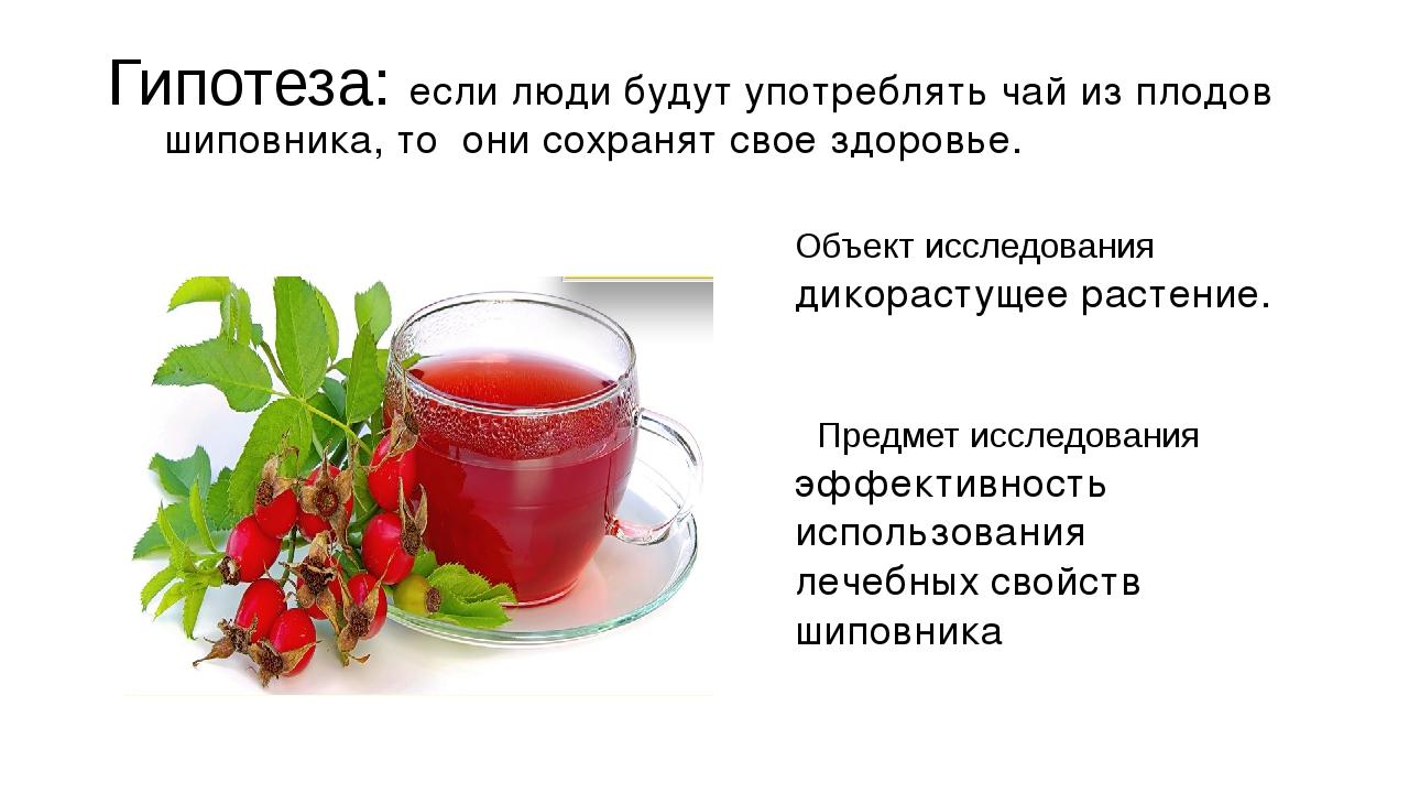 Гипотеза: если люди будут употреблять чай из плодов шиповника, то они сохраня...