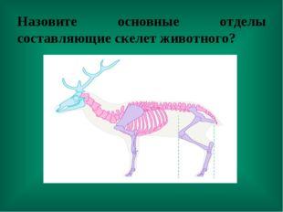 Назовите основные отделы составляющие скелет животного?
