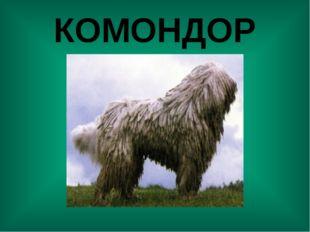 КОМОНДОР