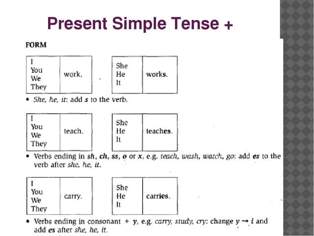 Present Simple Tense +