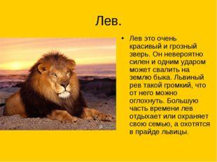 Лев. Лев это очень красивый и грозный зверь. Он невероятно силен и одним удар