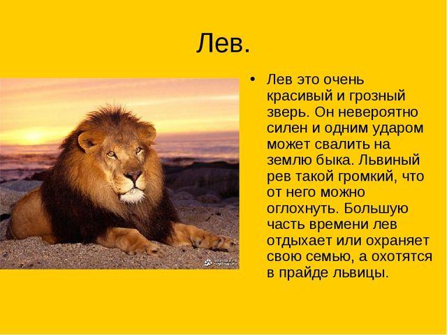 Лев. Лев это очень красивый и грозный зверь. Он невероятно силен и одним удар...