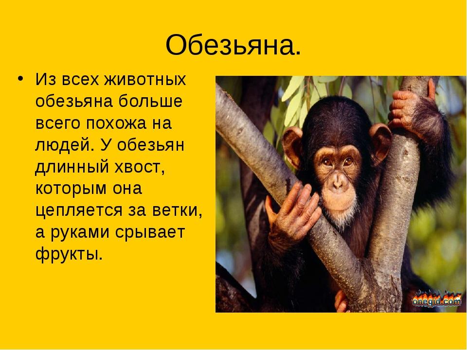 Обезьяна. Из всех животных обезьяна больше всего похожа на людей. У обезьян д...