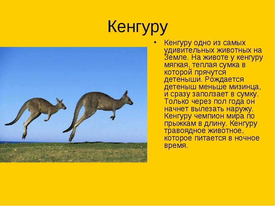 Кенгуру Кенгуру одно из самых удивительных животных на Земле. На животе у кен...