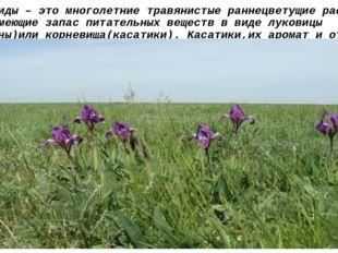 Эфемероиды – это многолетние травянистые раннецветущие растения, часто имеющи