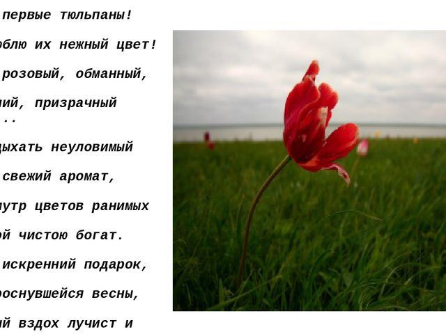Ах, эти первые тюльпаны!  Как я люблю их нежный цвет!  Туманно-розовый, обм...