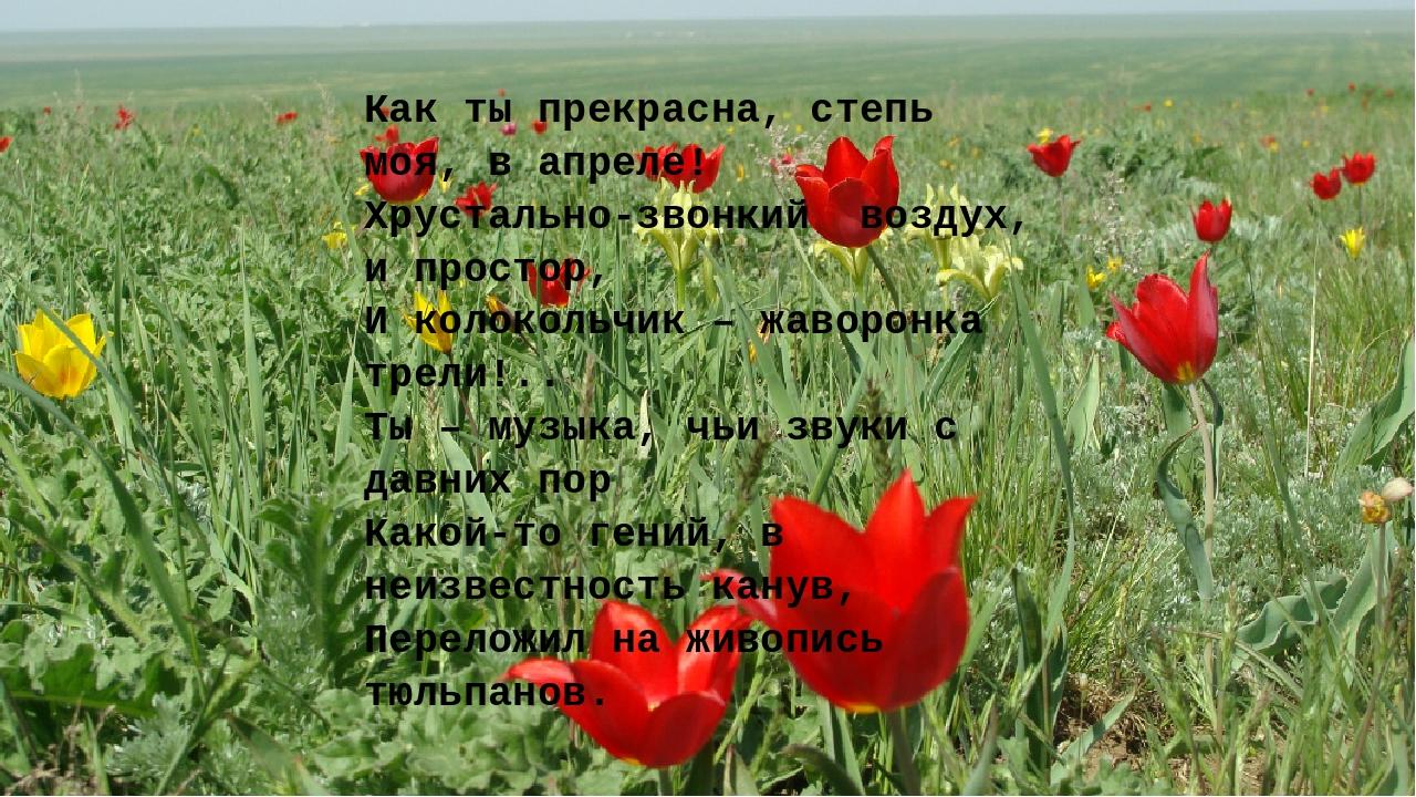 Как ты прекрасна, степь моя, в апреле! Хрустально-звонкийвоздух, и простор,...