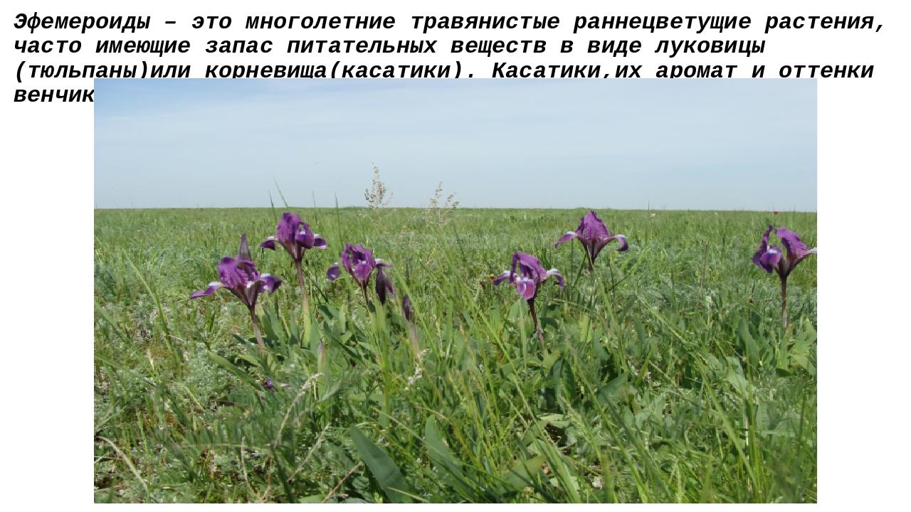 Эфемероиды – это многолетние травянистые раннецветущие растения, часто имеющи...
