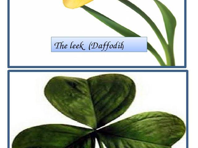 The leek (Daffodil) The shamrock