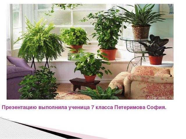 Презентацию выполнила ученица 7 класса Петеримова София.