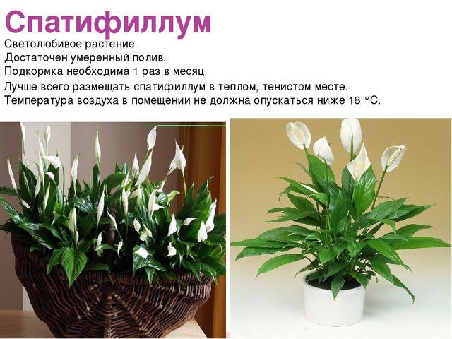 Спатифиллум Светолюбивое растение. Достаточен умеренный полив. Подкормка необ...