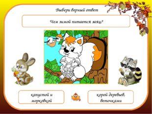 Выбери верный ответ Чем зимой питается заяц? капустой и морковкой корой дерев