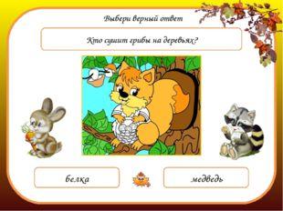 Выбери верный ответ Кто сушит грибы на деревьях? белка медведь