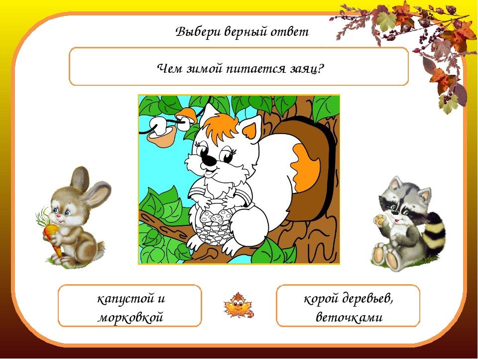 Выбери верный ответ Чем зимой питается заяц? капустой и морковкой корой дерев...